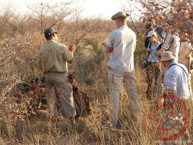 De bush-men geven een demonstratie hoe zij leven in de natuur