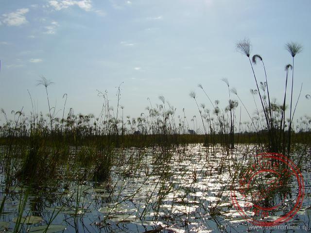 De Okavango Delta