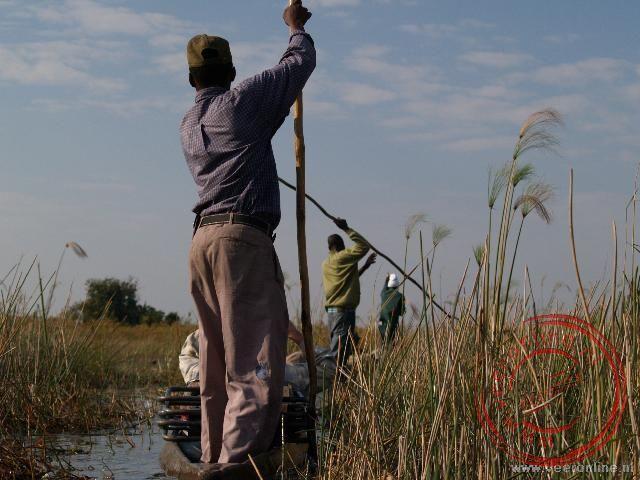 De Polers bomen de mokoros door het moeras