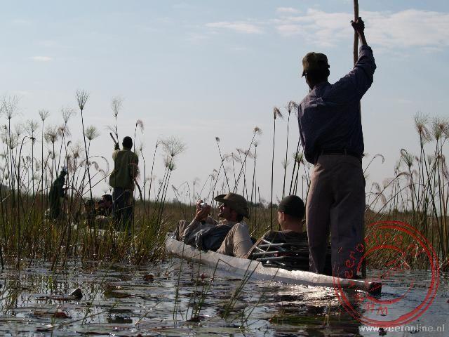 De mokoros glijden door het moeras