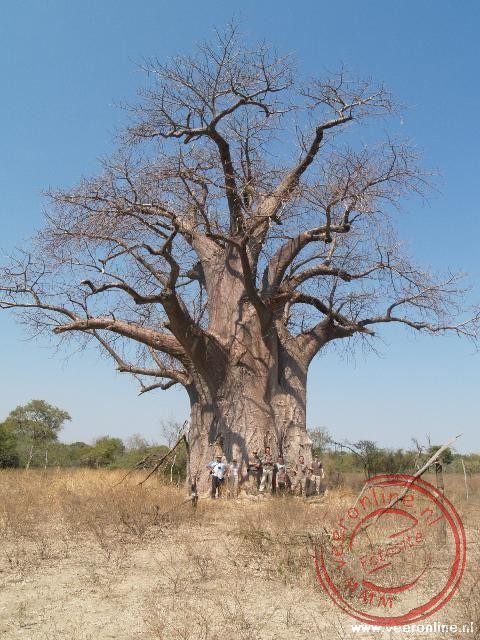 Een groepsfoto onder de Baobab boom