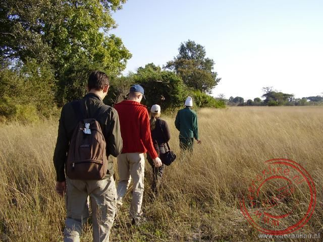 Een walk safari over de eilanden in de Okavango Delta