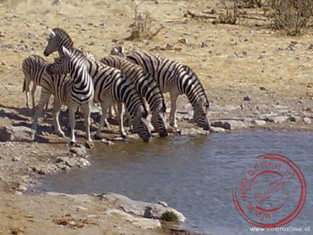 Zebras drinken aan de waterplaats Halali