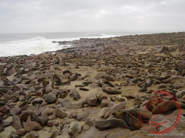 100.000 zeehonden bij elkaar op het strand van Cape Cross