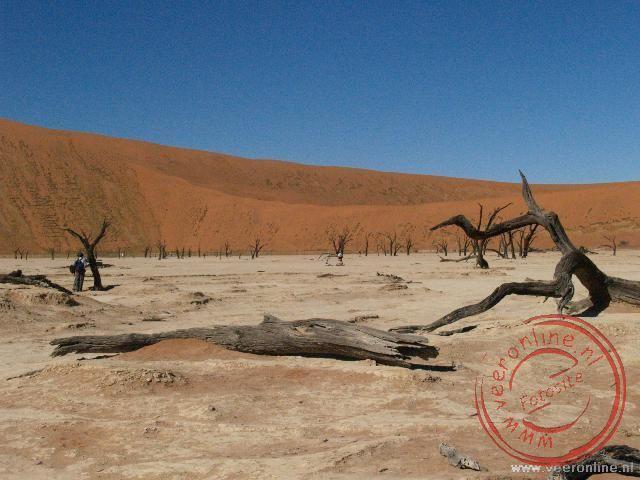Het zoutmeer met bomen die al vele honderden jaren dood zijn
