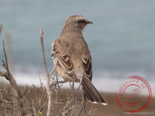 Een vogel in het natuurgebied Peninsula Valdéz