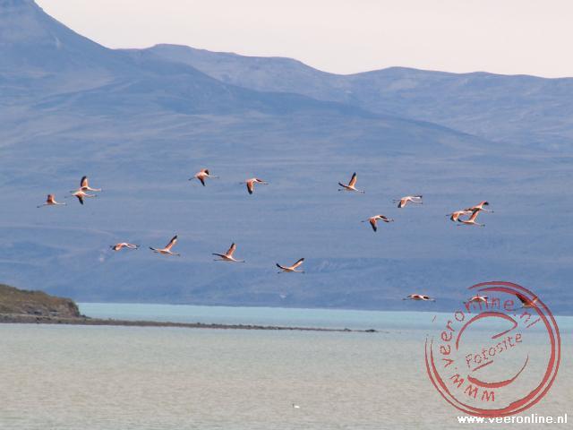Een groep flamingo's stijgt op boven het meer