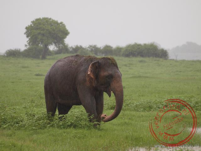 Olifanten rond het Kaudulla meer