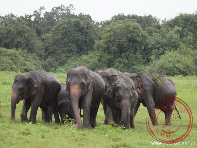 Honderden olifanten komen bijeen in Kaudulla