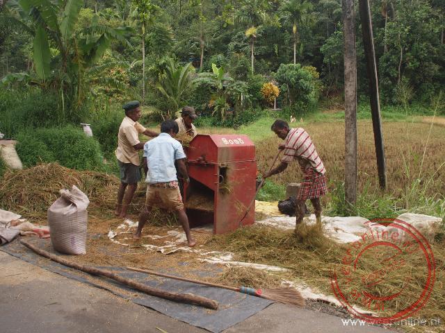 Het rijst wordt geplet met een machine