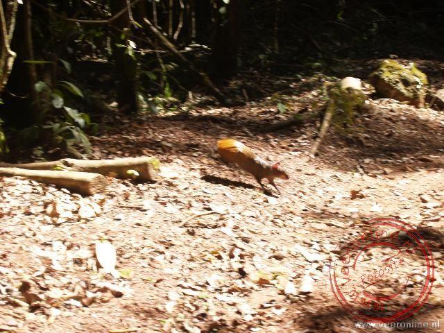 Een boskonijn steekt het pad over