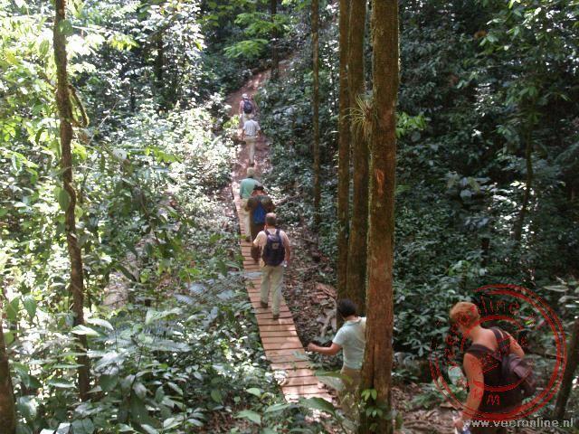Een wandeling door het oerwoud