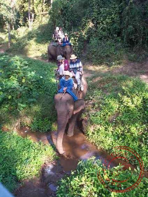 Een tochtje op een olifant