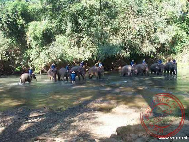 Het wassen van de olifanten