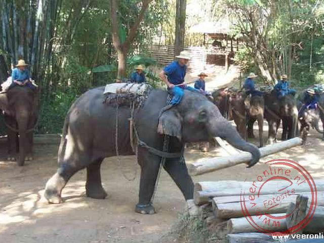 Een demonstratie van de olifanten