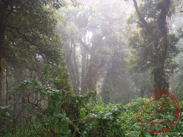 Een wandeling door de jungle