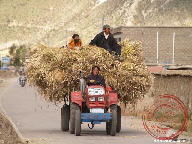Het is oogsttijd en al het vervoer wordt gebruikt voor het graan