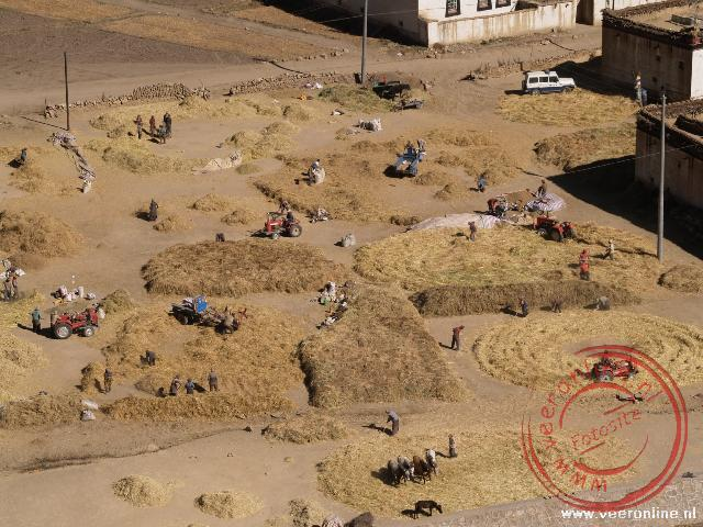 Het graan wordt geoogst in Shegar. Met paarden, met een tractor, met de hand en ... met een politieauto (linksboven)