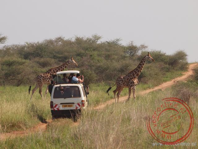 Giraffen steken over in Murchison Falls National Park