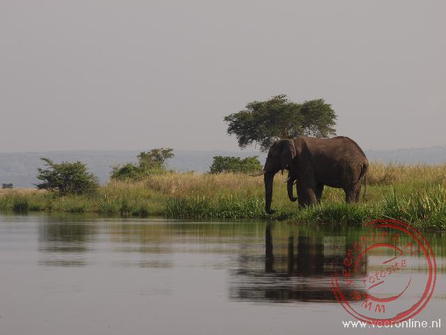 Een olifant staat in het Murchisons Falls National Park aan de Victoria Nile river