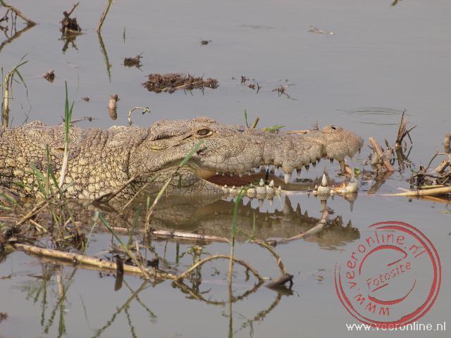 Een krokodil houdt zijn bek open voor koele lucht in het Kaingz channel in Queen Elisabeth NP