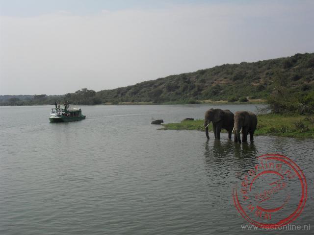 Een toeristen boot vaart langs de badenden olifanten