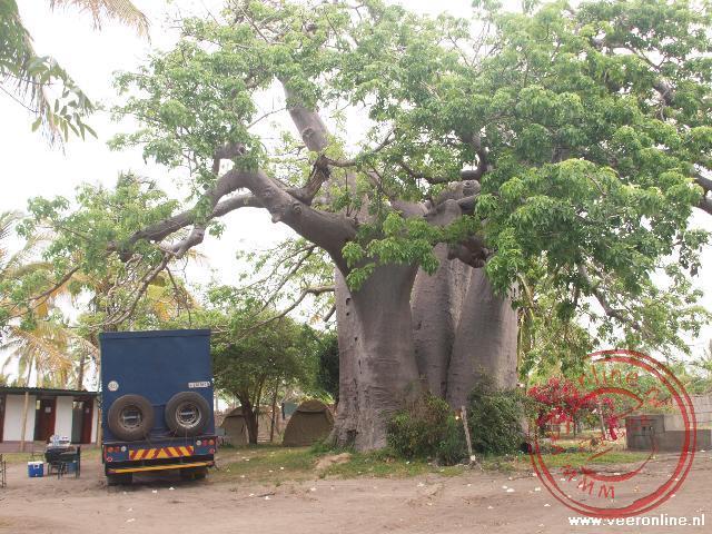 Een enorme Baobab boom op de campsite in Vilanculos
