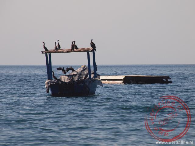 Aalscholvers rusten uit op een vissersboot