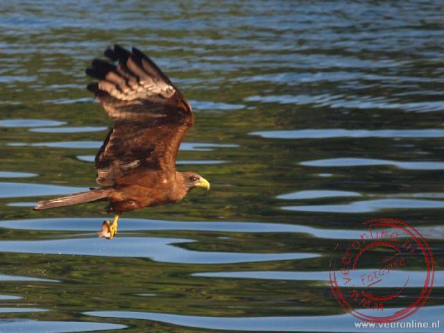 Een kite vliegt over het water