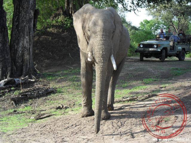 De olifant wil ruimte en komt dreigend op de Landrover aangelopen.