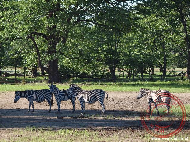 Zebra's in het Zambezi National Park nabij Livingstone