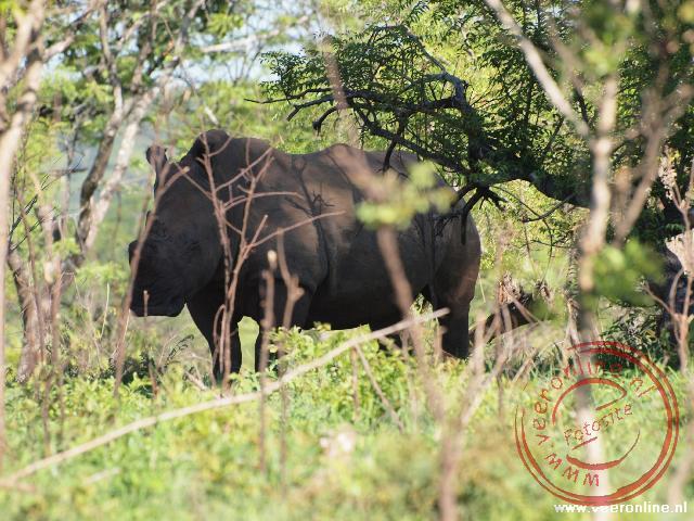 In het Zambezi National Park in Zambia bevinden zich de enige neushoorn van het land