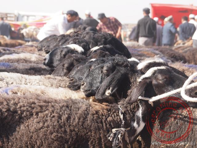 De schapen en geiten wachten zij aan zij op een nieuw baasje