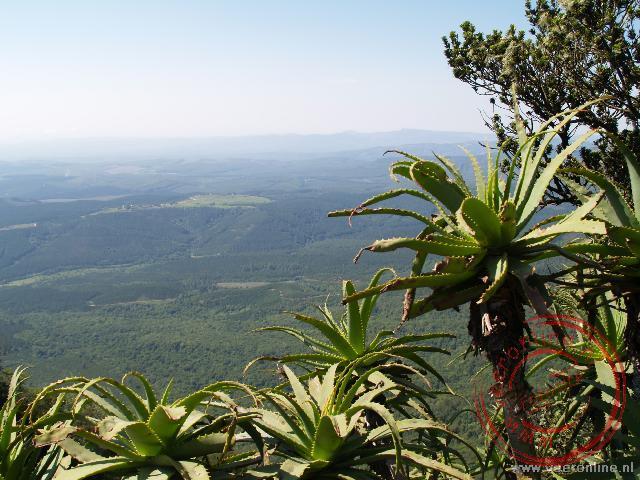 Het uitzichtpunt God's Window in Zuid Afrika