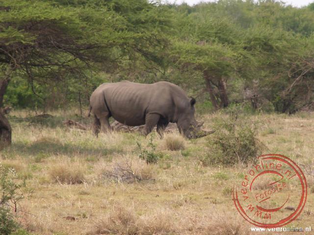 De Witte Neushoorn in het Kruger Park