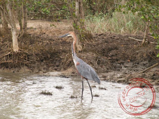 Een reiger bij Greater St Lucia Wetland Park