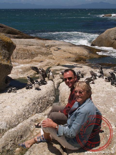 De pinguïns bij Simontown